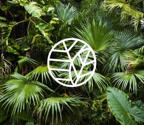 NICFI – Norwegian International Climate and Forest Initiative